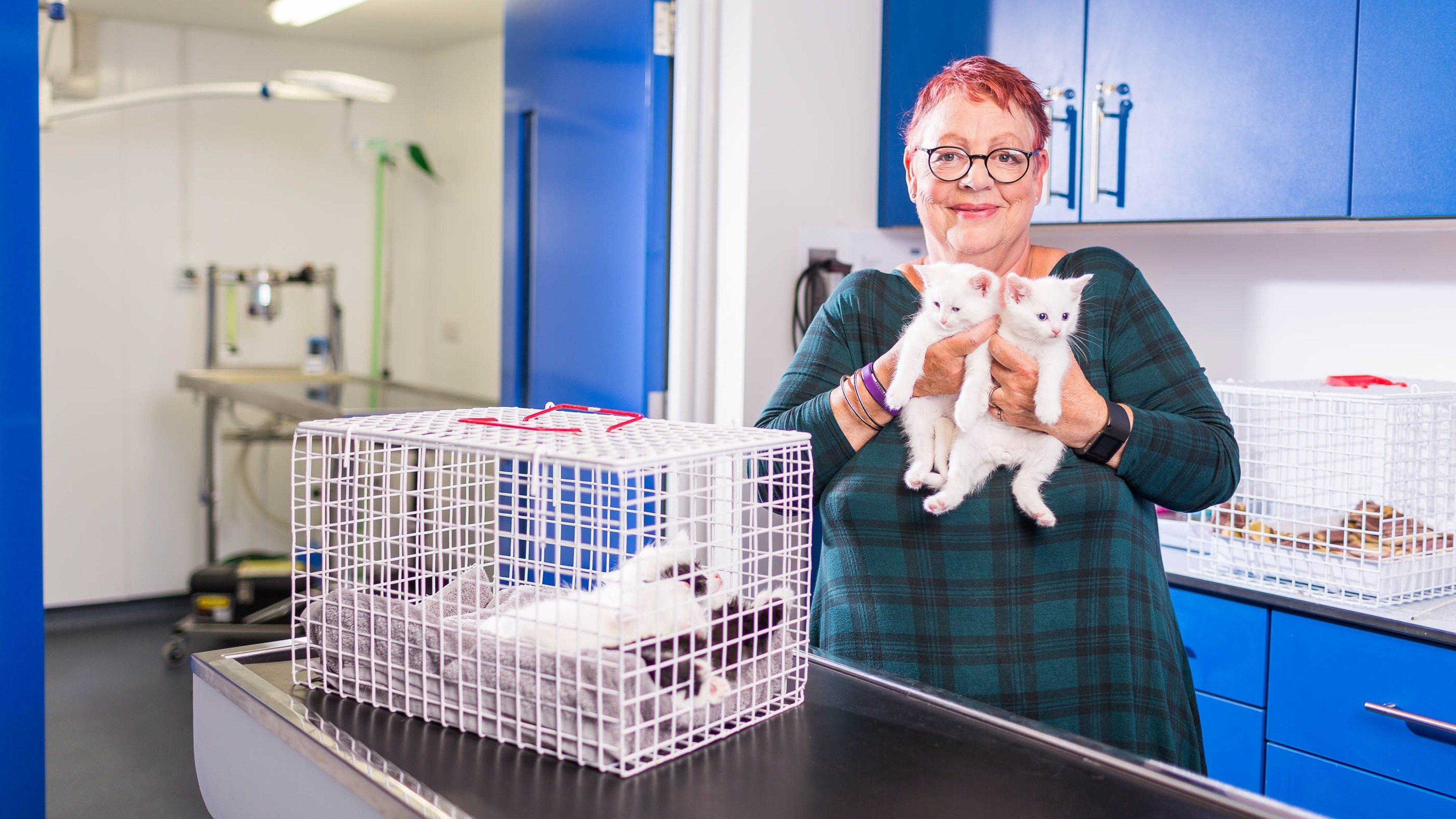Jo Brand S Cats Kittens Sky Com