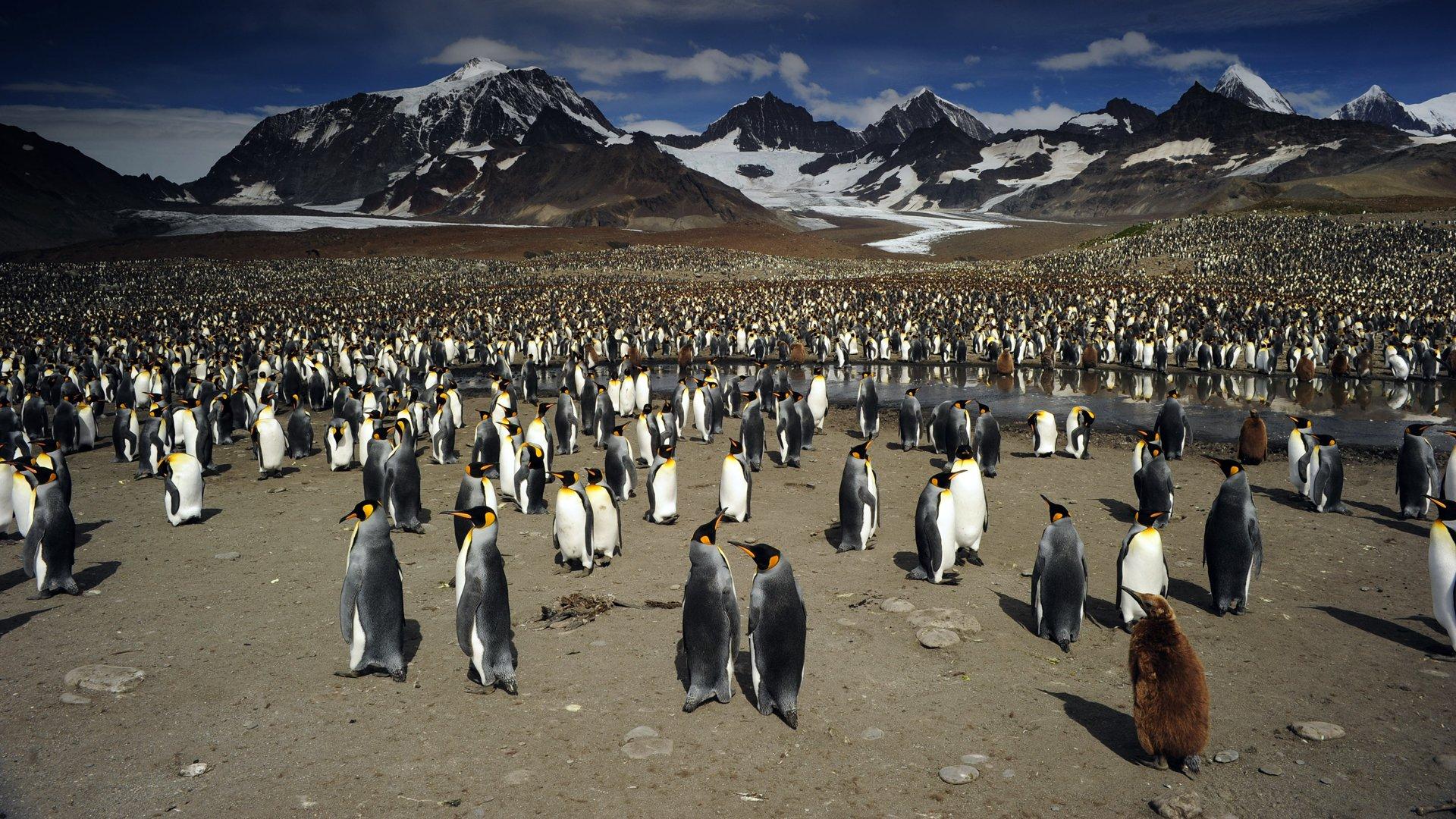 David Attenborough S Natural History Museum Alive Watch Online