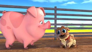 Pigs and Pugs/Bob Loves Mona