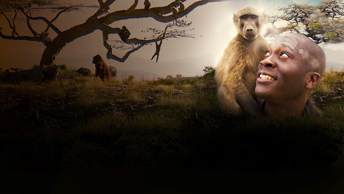 Monkeys an amazing animal family sky voltagebd Images